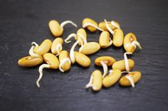 How To make sure seeds germinate