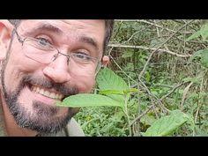 Erva-baleeira No Feijão. Sabia Disso?? - YouTube Youtube, Natural, Videos, Healing Herbs, Medicinal Plants, Natural Herbs, Edible Plants, About Plants, Natural Remedies