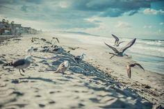 Seagulls in San Diego