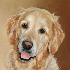 Beautiful retreiver. Available for commissions in the New Year #dog…