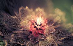 Descargar fondos de pantalla los fractales, las flores, el arte floral de pétalos de