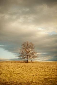 Lone tree in a field by Carl Christiansen