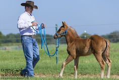 Downunder Horsemanship | Step-By-Step Foal Training