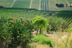 La Sicilia tra le 5 mete turistiche europee più gettonate dai winelovers - Il Sole 24 Ore
