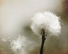 ~dandelion ~*