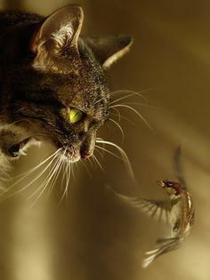 **Most beautiful animals photography