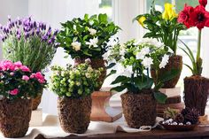 A Year of Living Flowering Plants | 10 Unconventional Takes on Classic Mother's Day Gifts