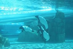Dolphin Plunge ride at Aquatica!