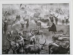 Sebastiao Salgado-TRIBESMEN WITH LARGE HERD OF CATTLE- Kei Sudan Africa 13x10 #PHOTOREALISM