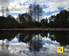 Saval Park, Valdivia