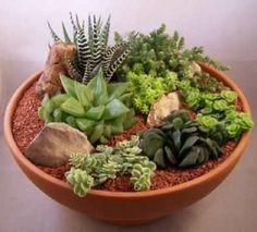 como decorar con plantas suculentas - Buscar con Google