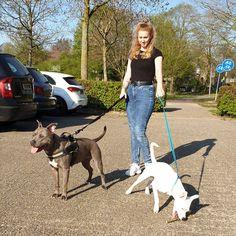 Luna en snow Mom Jeans, Dogs, Pants, Fashion, Moda, Trousers, Pet Dogs, Women Pants, Doggies