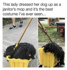 Dog dressed as janitor's mop