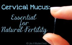Cervical Mucus: Essential for Natural Fertility...this is good info for my friends trying to get pregnant :)