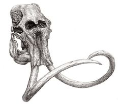 Woolly Mammoth Skull Pen and Ink by E. Hoffman
