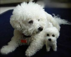 Needle Felted Fiber Sculpture Portrait of Your Bichon Frise Dog or Other Small, Curly Coated Breed