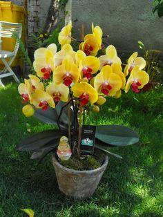 Gyakran bebizonyosodik, hogy a sikeres növénygondozáshoz kell valami plusz. Egy kis dédelgetés, egy kis babusgatás lenne a titok? Container Vegetables, Planting Vegetables, Growing Vegetables, Container Gardening, Companion Gardening, Growing Tomatoes In Containers, Orchid Arrangements, Orchids Garden, Classic Garden