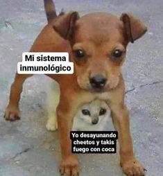 Best Memes, Dankest Memes, Jokes, Funny Spanish Memes, Stupid Funny Memes, Funny Cat Videos, Comedy Central, Yandere, Persona