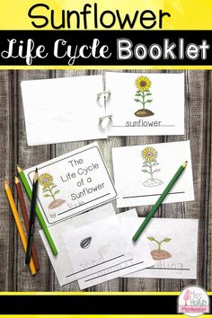 Your students will love making this cute booklet depicting the life cycle of a sunflower! Fun fall activity for preschool, kindergarten, 1st grade. Apple Life Cycle, Pumpkin Life Cycle, Fun Fall Activities, Science Activities, Science Ideas, Sunflower Life Cycle, Sunflower Crafts, Preschool Kindergarten, Preschool Ideas