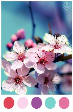 Chinese New Year colour palette of cherry blossom sakura - lucky red, petal pink, plum, jade, blossom pink