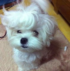 Try Not To Be Too Jealous Of These Animals Who Are Having Killer Hair Days!