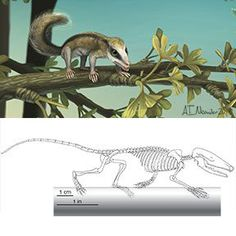 Early mammals (Middle Jurassic mammaliaforms) readily adapted to a variety of diverse environmental niches.