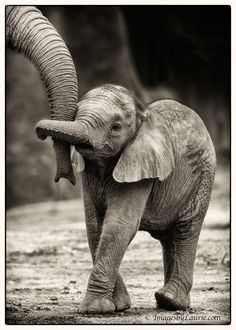 Fascinating photos of Animals taken by amateurs