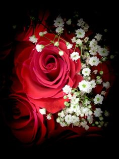 RED RED ROSE AND BABY BREATH > DESIGN PHOTOGRAPHY