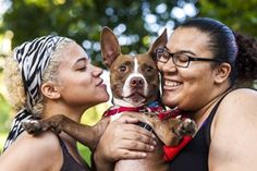 Domingo, the pit who found a loving home, ASPCA, happy tails. Red and white pit bull