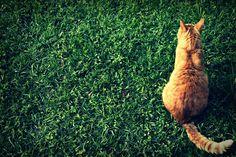 Orange Cat on Green Grass