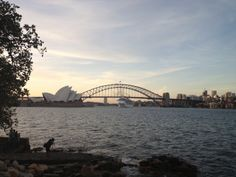 Mrs Macquarie's Chair -best view in gardens