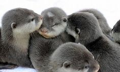 baby otters....