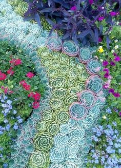 Our gardening guides will help you select plants, make a raised bed, create garden art, design a garden path, tackle quick-and-easy garden projects and save time in your garden ideas Succulent Gardening, Cacti And Succulents, Planting Succulents, Planting Flowers, Organic Gardening, Flowers Garden, Succulent Garden Ideas, Vertical Succulent Gardens, Mosaic Flowers
