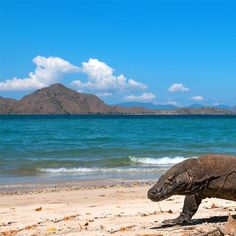 Do you know what this week is? It's National Park week! And the best way to celebrate is, of course, by visiting a national park. The pick of the day is the remarkable Komodo National Park, that in 1986 was declared a UNESCO World Heritage Site and a Man and Biosphere Reserve . This is the last home on earth of the prehistoric giant Komodo lizard.  Here live some 2,500 Komodo Dragons and other unique and amazing wildlife, this is the perfect park to go for those who love  nature and…