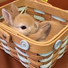 Ideas Funny Cute Animals Baby Bunnies For 2019 Cute Baby Bunnies, Funny Bunnies, Cute Funny Animals, Cute Baby Animals, Funny Cute, Animals And Pets, Cute Cats, Funny Baby Pictures, Cute Animal Pictures