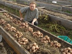 Grow Better Plants With These Great Tips Vegetable Garden Planning, Backyard Vegetable Gardens, Veg Garden, Vegetable Garden Design, Edible Garden, Vegetable Ideas, Home Grown Vegetables, Growing Vegetables, Hydroponic Gardening