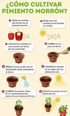 How to grow bell pepper plants in pots - Vital Kitchen: What to cook today ?, # how to # ideas of gardening # bell peppers # What <-> Eco Garden, Herb Garden Design, Vegetable Garden Design, Fruit Garden, Edible Garden, Garden Plants, Vegetable Gardening, Indoor Garden, Gardening Tips