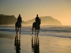 Noordhoek Beach - An expensive beach located near Cape Town, South Africa. Only miles) from the center of Cape Town, Noordhoek beach is amazing and ide Oregon Coast, East Coast, Cavalo Wallpaper, North Island New Zealand, Beach Rides, Horse Riding, Trail Riding, Equestrian, South Africa