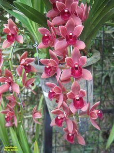 https://flic.kr/p/PxdM1Y | Orquidea | Orquídeas de uma exposição no Jardim Botânico do Rio de Janeiro.