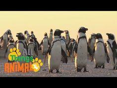 Time 4 Kindergarten: All About Penguins