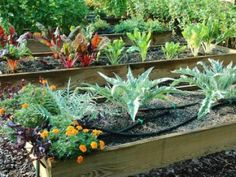 Raised beds can be as simple as mounding up soil into a deep, wide planting area. HGTV experts offer a few tips on how to garden with them.