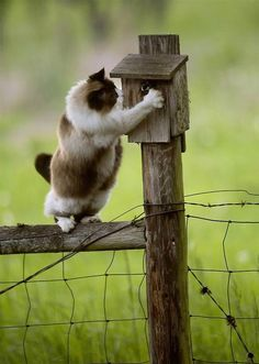 Cat Trying to Get at Bird House