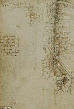 Da Vinci | The veins of the pelvic and lumbar region