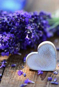 Ana Rosa, syflove: lavender heart