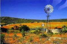 Wild flowers on a farm near Namaqualand, Northern Cape, South Africa Farm Windmill, South Afrika, Old Windmills, Out Of Africa, Le Moulin, African Safari, Landscape Photos, Beautiful Landscapes, Wild Flowers