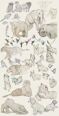Animal Sketches by shark-bomb.deviantart.com on @DeviantArt