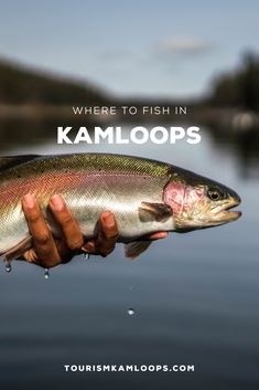 Kamloops has plenty of well known spots to catch fish along with some really great secret spots that are waiting for you to find them. Going Fishing, Ice Fishing, Best Fishing, Fall Months, Summer Months, Autumn Lake, Fraser Valley, Lake Resort, Fishing Guide