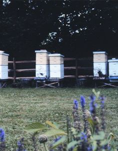 DIY Backyard Beekeeping: A Guide for Beginners If you can garden, you can be a beekeeper. Here are the first steps: the questions to ask, t...