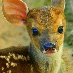 God's Tiny Animals (@GodsTinyAnimals) | Twitter