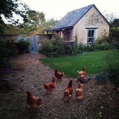 Memories of my Grandparents who had chickens! Fresh eggs in the morning!Photo by amandacbrooks